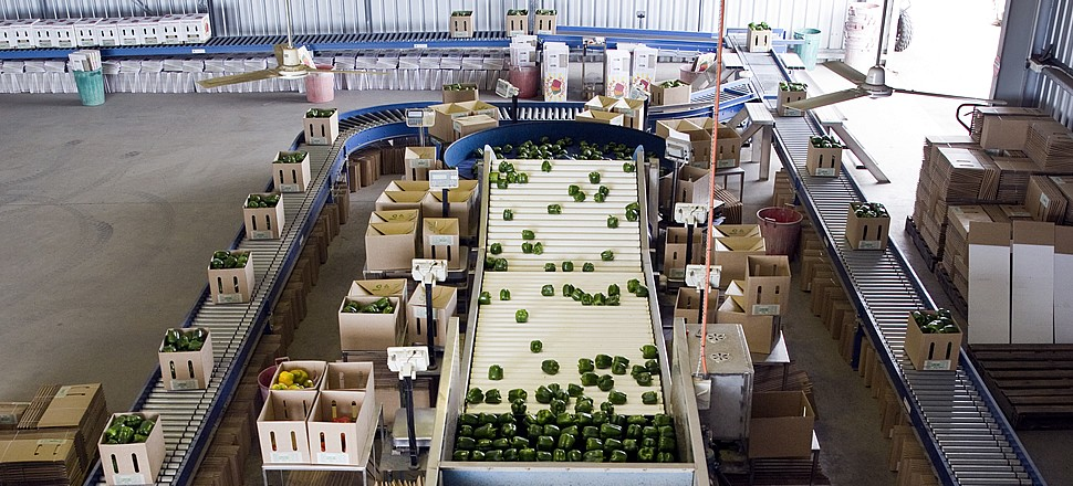 Fruit And Vegetable Handling Systems